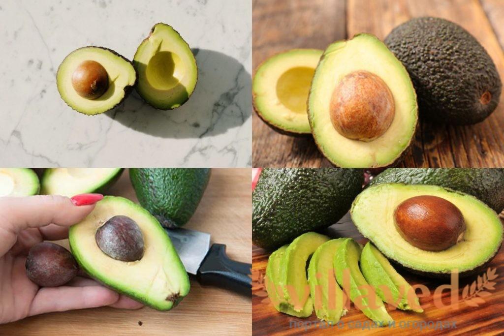 Как выбрать авокадо для посадки