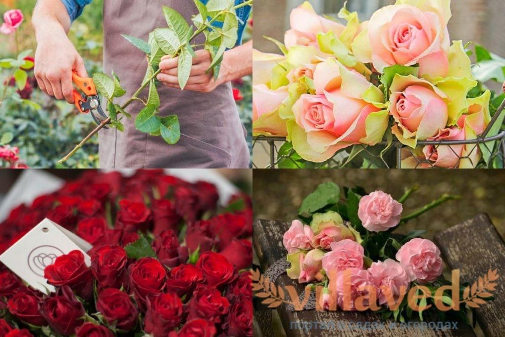 Укоренение розы из букета