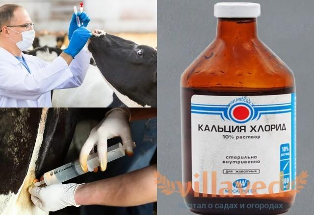 Лекарства от отека вымени у коровы